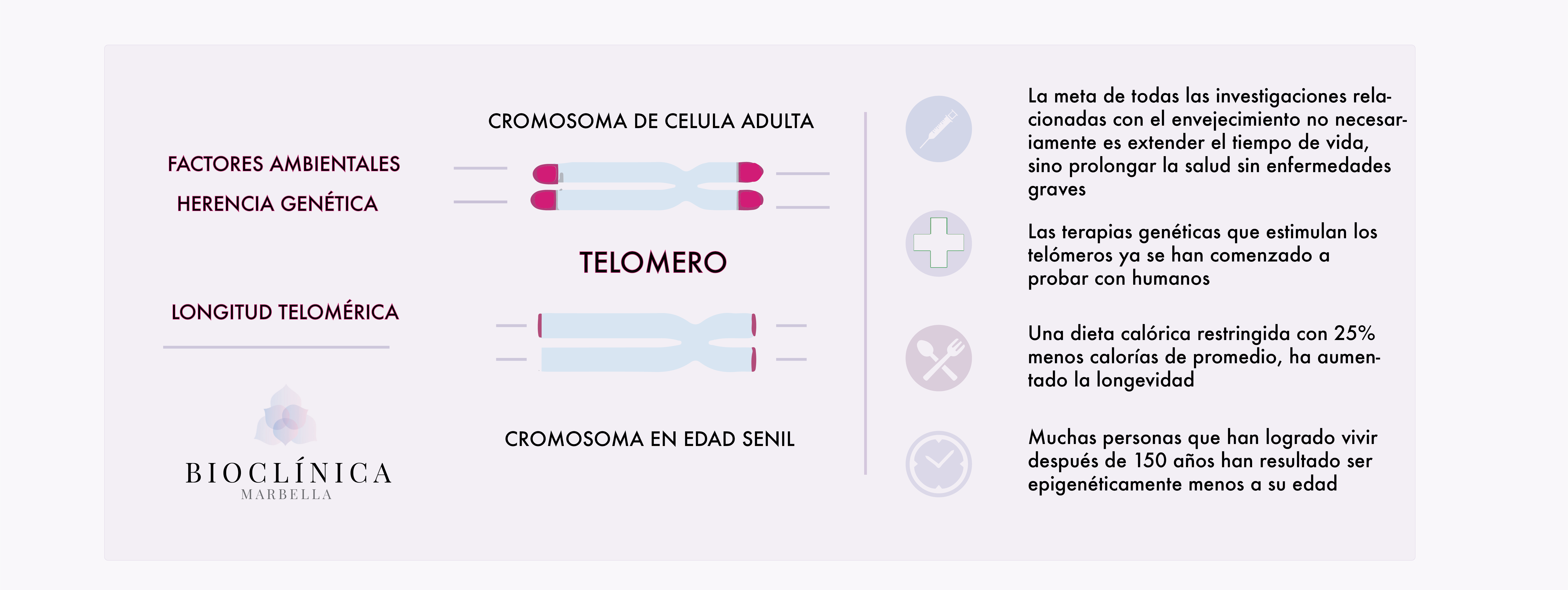 anti-aging-telomeros-ADN-antiaging-antiage-bioclinica-marbella-medicinapreventiva